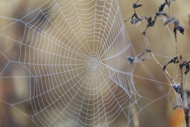 Spinnennetz mit tau morgens