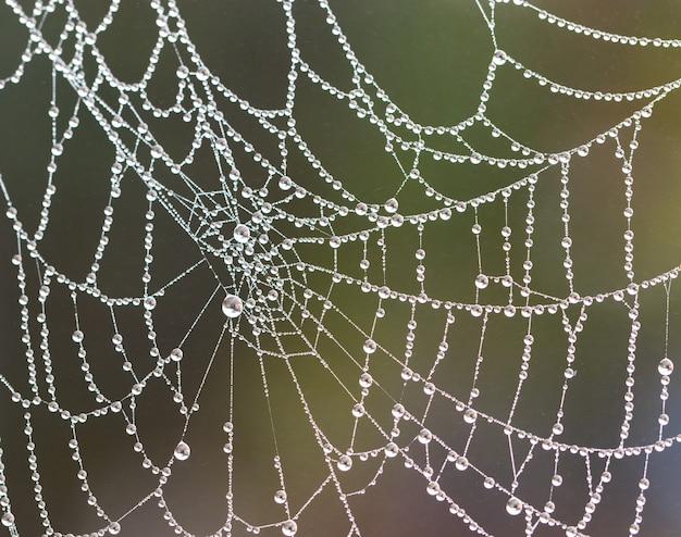 Spinnennetz mit verschwommenen regentropfen; nahansicht.