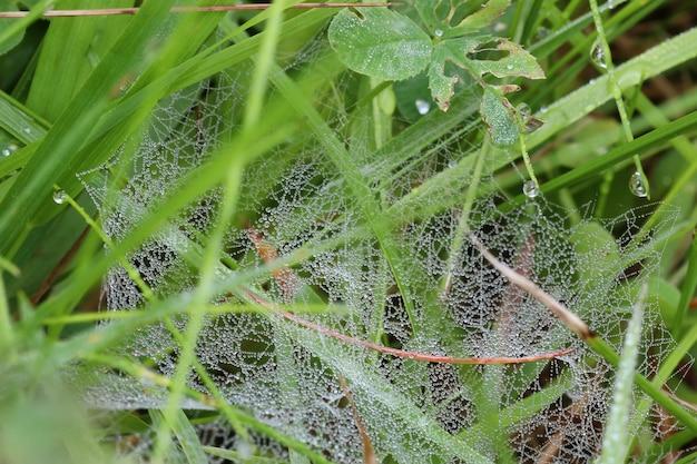 Spinnennetz tautropfen wasser