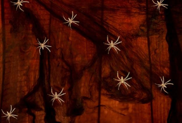Spinnennetz und einige spinnen, die auf es baclground gehen