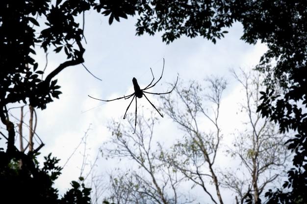 Spinnenschattenbild im wald in nordthailand