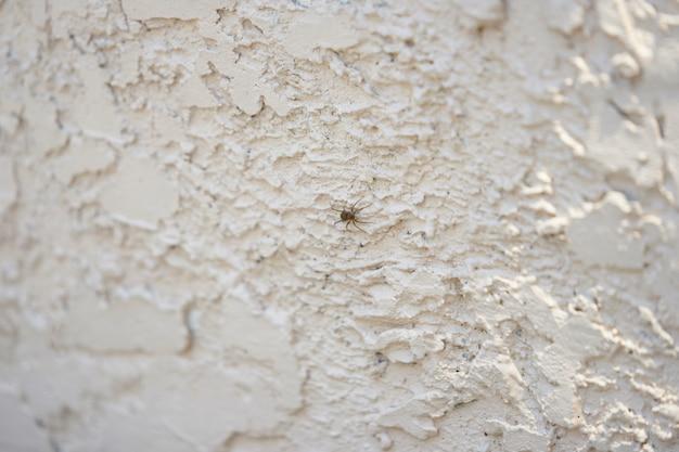 Spinnenweg auf wand der rauen betondecke mit selektivem fokus