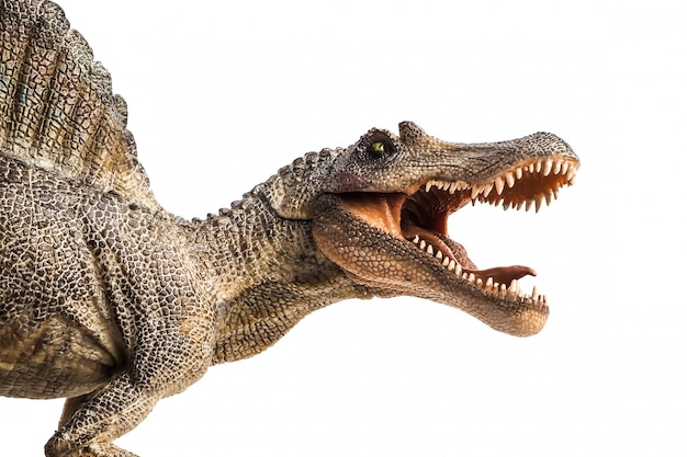 Spinosaurus, dinosaurier auf weißem hintergrund