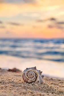 Spiral shell auf sandy tropical beach bei sonnenaufgang, ferien