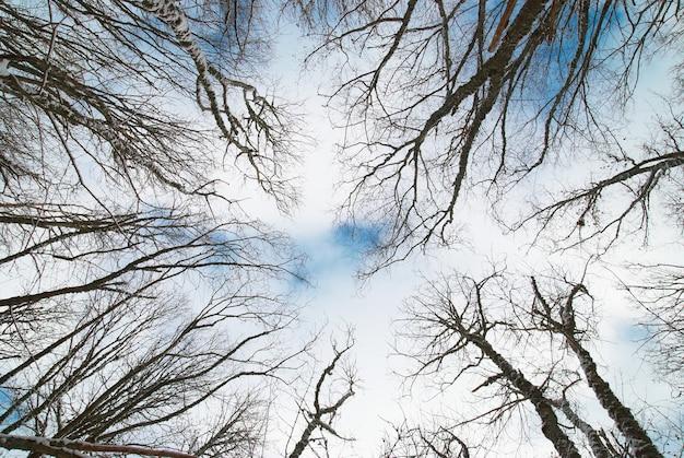 Spitze der winterbäume mit blauem himmel und wolken