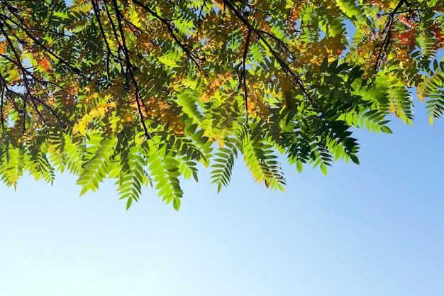 Spitze eines baumes mit mehrfarbigem laub gegen einen blauen himmel