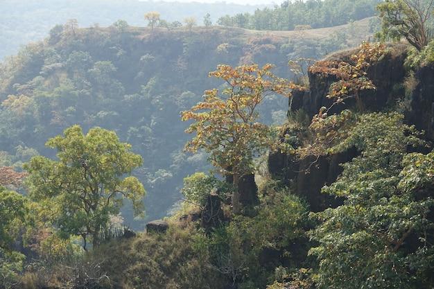 Spitze eines berges mit bäumen
