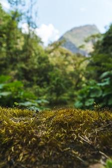Spitze eines moosigen felsens mit dem verschwommenen nebelwald dahinter