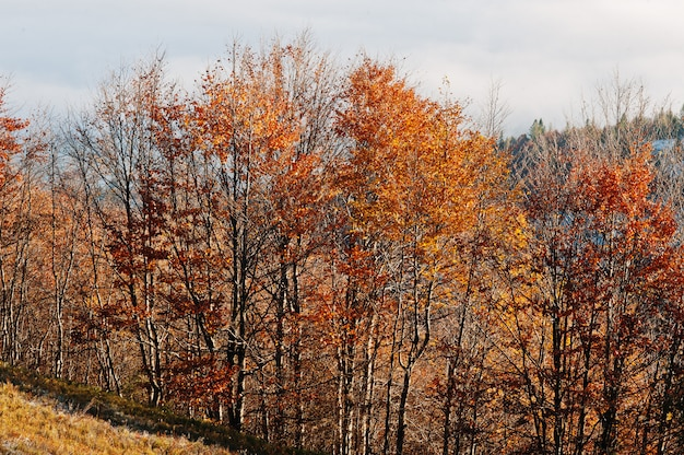 Spitze von bäumen auf sonne beleuchtet auf herbstgebirgshintergrundnebel.
