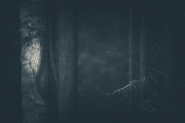 Spooky dark forest