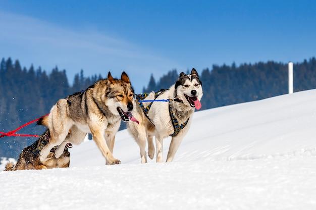 Sportliche hunde in einer verschneiten landschaft