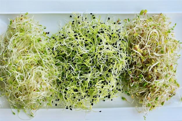 Sprießen sie alfalfa, zwiebeln und mischen sie salate