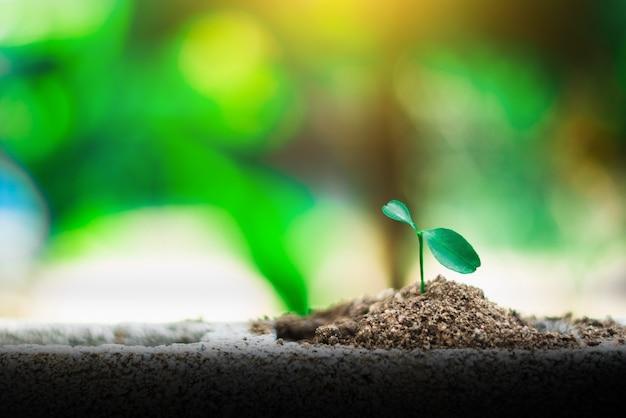 Sprießen sie das wachsen auf boden, neues leben und hoffnungskonzept