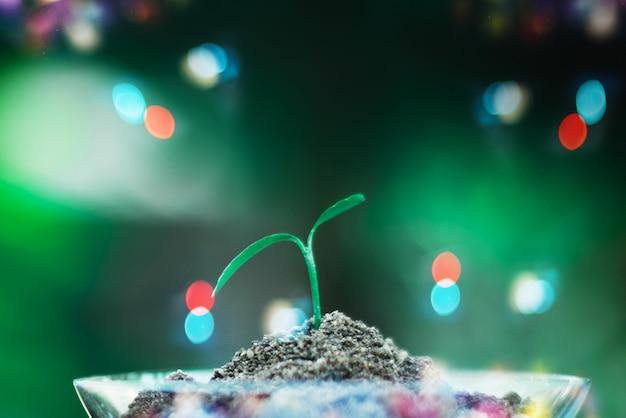 Sprießen sie das wachsen im glas mit bokeh hintergrund, natur und sorgfaltkonzept