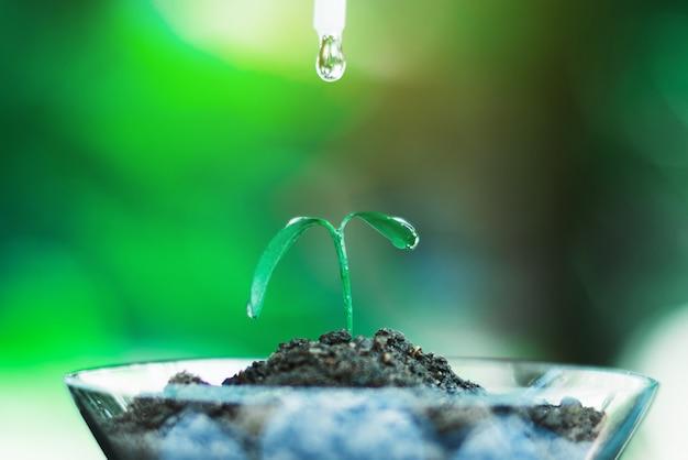 Sprießen sie das wachsen im glas mit wassertropfen-, natur- und sorgfaltkonzept