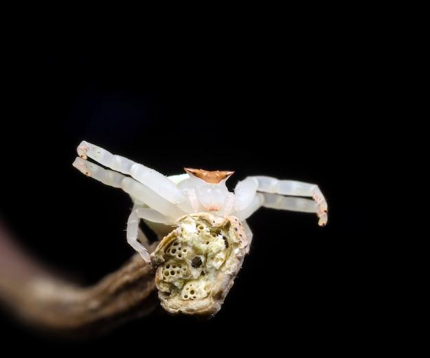Springende spinne in der natur