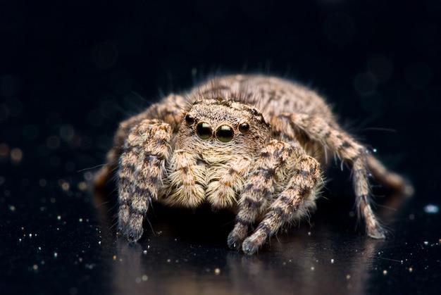 Springendes spinnenmakrofoto