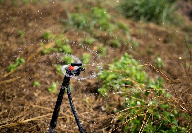 Sprinklerkopf, der den busch wässert.
