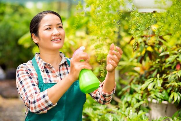 Spritzwasser auf pflanzen