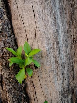 Sprössling wachsen auf naturbaumrindehintergrund