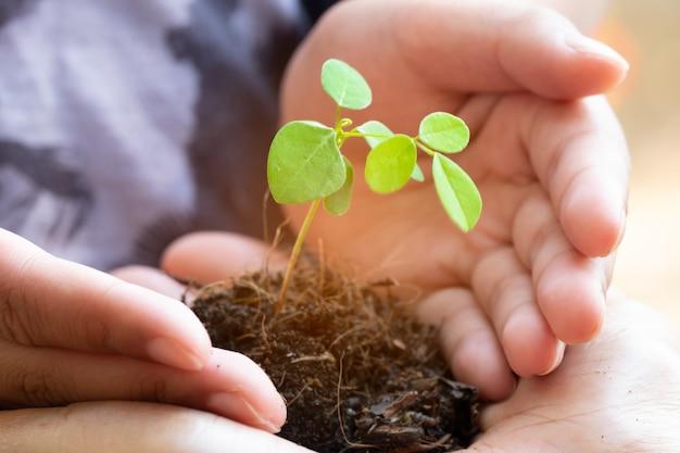 Sprösslingsanlage und boden in den händen halten. baum wächst und verhindert durch den menschen.
