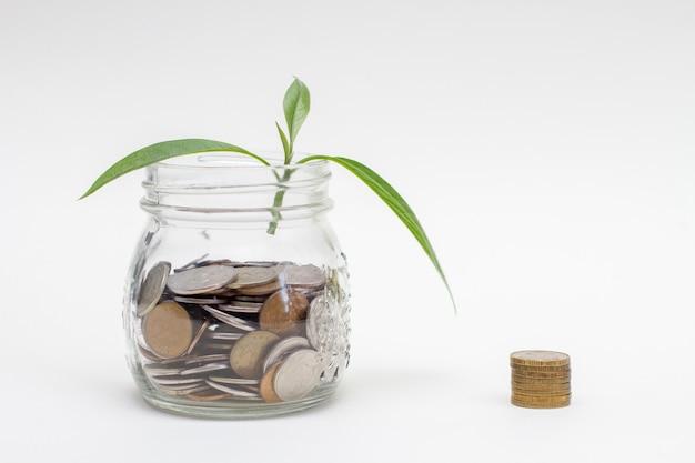 Spross wächst auf glas sparschwein und stapel von münzen.