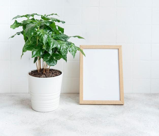 Sprossen des kaffeepflanzenbaums in einem topf auf dem tisch und posterrahmen nachahmen