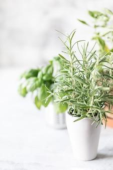 Sprossenkräuter im topf und im korb. pflanzen im frühjahr.