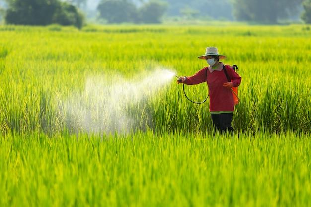 Sprühpestizide der asiatischen landwirtlandwirtschaft auf reisgebieten