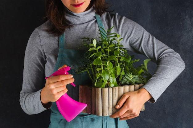 Sprühpflanze der gärtnerin. pflege für heimische pflanzen. wasser fällt auf die blätter und hinterlässt tropfen
