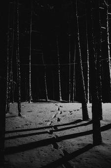 Spuren im schnee eines dunklen waldes