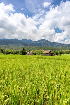 Srtaw-hütte innerhalb des reisfeldes am huai thung tao-see in chiang mai, thailand, umgeben von schönen naturbergen und -wolken