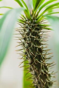 Stacheliger stängel der pflanze