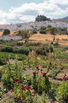 Stadt ardales in der provinz malaga