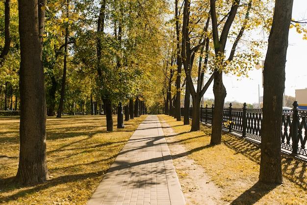 Stadtgasse im herbst im park