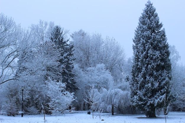 Stadtpark im winter