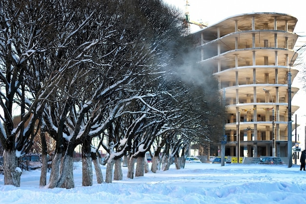 Stadtstraße baum holz sonne winter