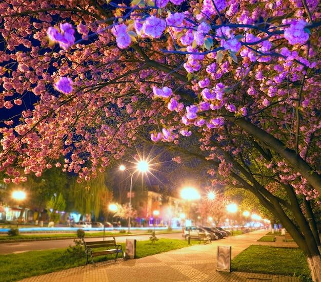 Städtische nachtansicht mit japanischer kirschbaumblüte (uzhgorod-stadt, ukraine). einige zonenunschärfefilter wurden angewendet, um die rf-verwendbarkeit dieses fotos zu ermöglichen.