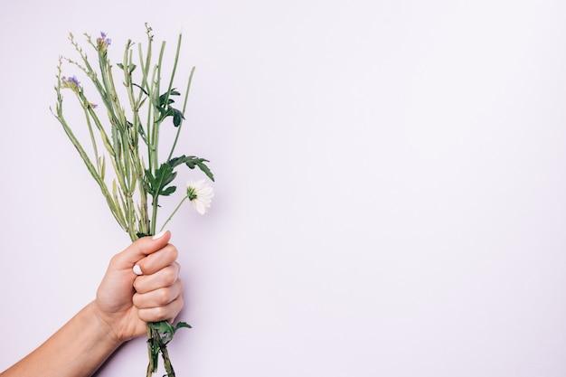 Stämme von blumen in der weiblichen hand mit weißer maniküre auf einem hellen hintergrund