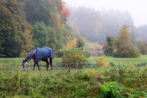 Stammbaumpferd mit mantel, der gras draußen im nebel isst.