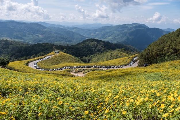 Standpunkt des mexikanischen sonnenblumenfeldes.