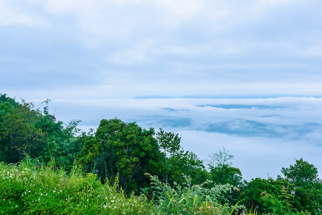 Standpunktmeer des nebels, schöner bergblick mit nebel, sonnenaufgangszene, doi samer dao