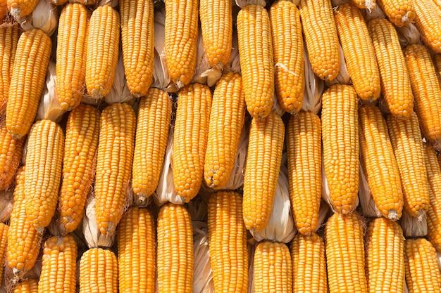 Stapel des gelb getrockneten korngebrauches für hintergrund