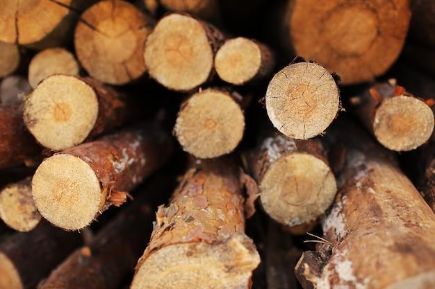 Stapel geschnittener kiefernstämme in einem wald. holzstämme, holzeinschlag, industrielle zerstörung, wälder verschwinden, illegaler holzeinschlag. selektiver fokus.