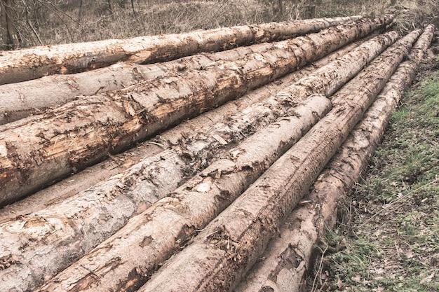 Stapel von baumstämmen in einem wald - entwaldungskonzept