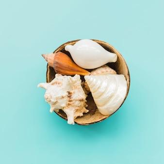 Stapel von muscheln in der kokosnussschale