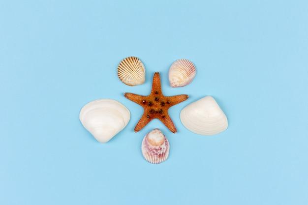 Starfish und muscheln auf blauer, draufsichtebenenlage