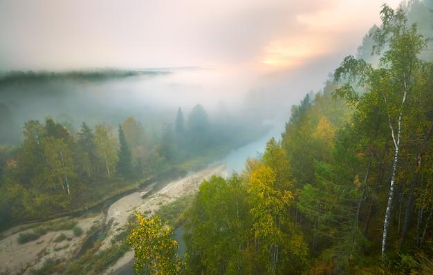 Starker nebel in den hirschbächen des nationalparks