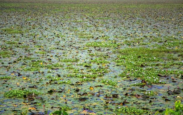 Stauwasser in kerala, indien