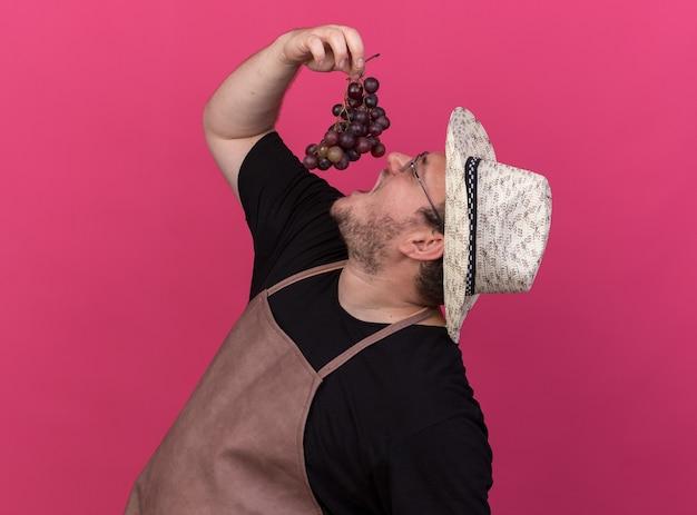 Stehen in der profilansicht junger männlicher gärtner, der gartenhut trägt, der trauben lokalisiert auf rosa wand versucht